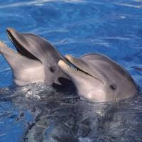 Insolite : nager avec les dauphins en Méditérranée