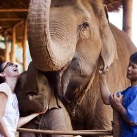 Prendre le petit déjeuner avec un éléphant en Thaïlande.