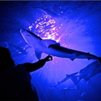 L'aquarium géant de Paris, ça change des « poissons » de la Seine !