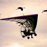 Voler en ULM avec des oiseaux en Auvergne!