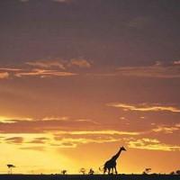 Safari + séjour plage au Kenya Afrique