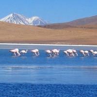 Salar d'Uyuni : une beauté exceptionnelle du lac salé en Bolivie