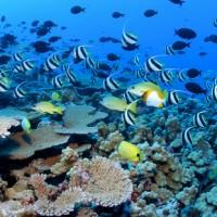 Port Douglas et la grande barrière de corail!