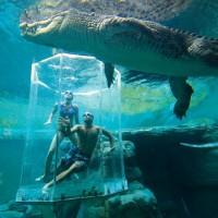 Nagez à côté des crocodiles.