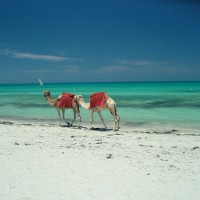 Djerba à prix réduit, des vacances économiques au paradis!
