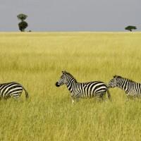 Kenya – Safari en famille