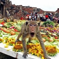La fête des singes en Thaïlande!