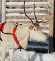 Laponie – Séjours multi-activités