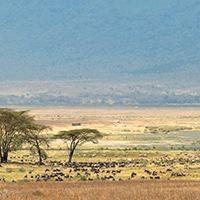 Tanzanie – Safari pour le nouvel an